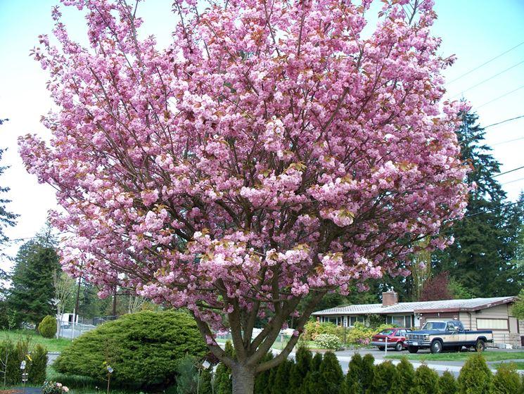 cilieigio fiorito