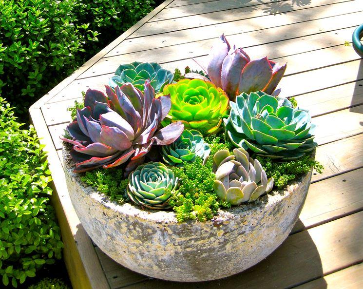 Composizioni di piante grasse