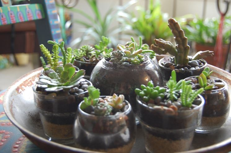 Varietà piante grasse