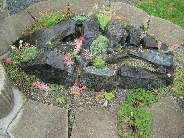 Piante grasse con fiori piante grasse da appartamento - Giardino roccioso piante grasse ...