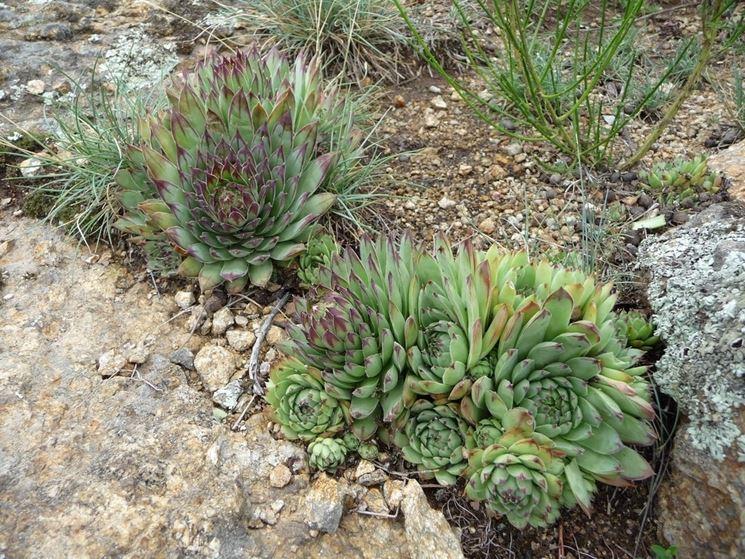 Piante grasse da esterno piante grasse da appartamento variet di piante grasse da esterno - Piante grasse da esterno in inverno ...