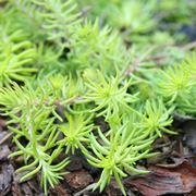 piante grasse pendenti
