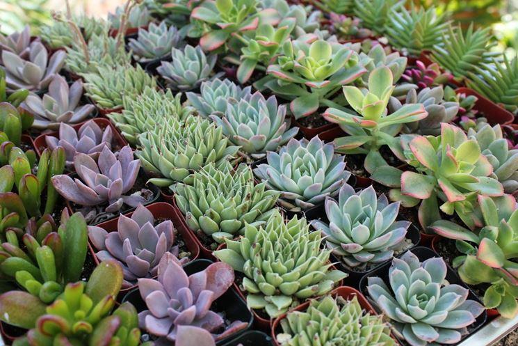 Diverse tipologie di pianta