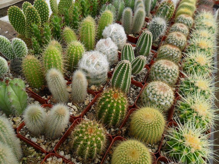 Esemplari di piante grasse