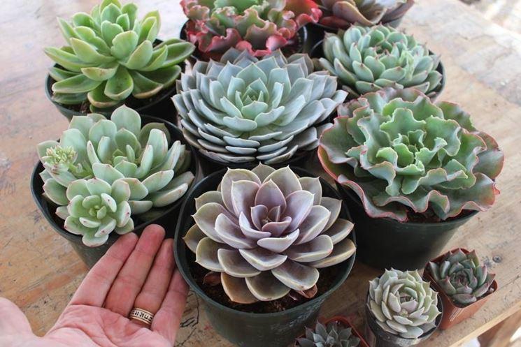Vendita piante grasse piante grasse da appartamento for Vendita piante grasse on line
