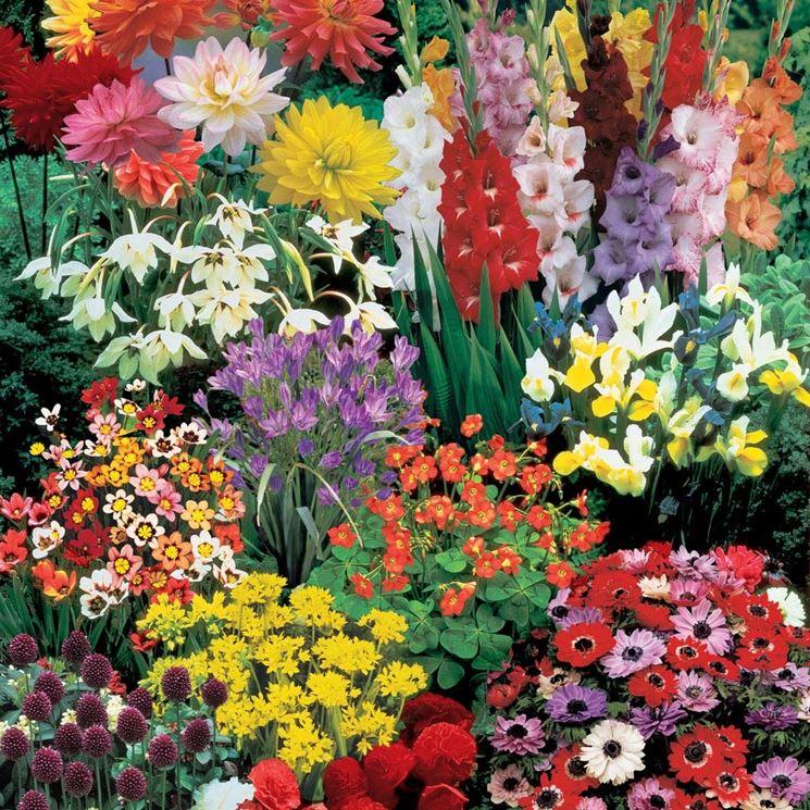 Bulbi in fiore