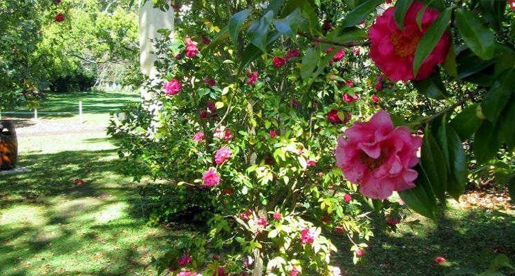 Fiori da giardino piante per giardino variet fiore for Fiori sempreverdi da giardino