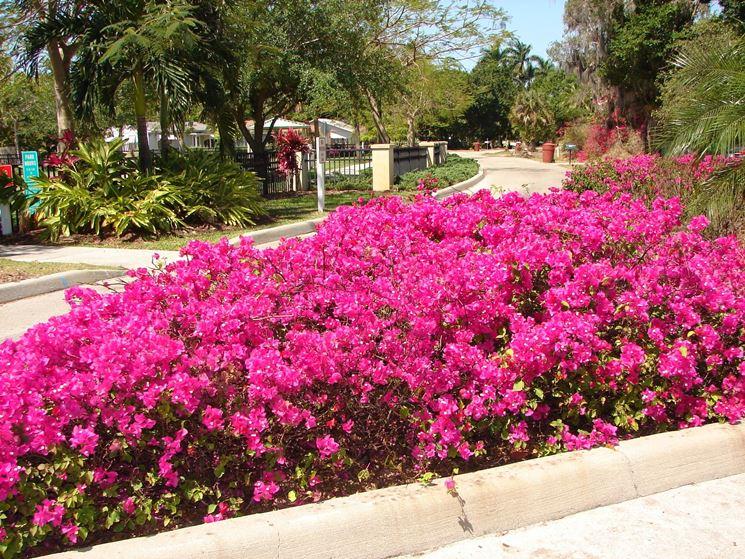 Fiori da giardino piante per giardino variet fiore - Piante per giardino ...