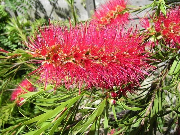 I fiori da giardino piante per giardino fiori esterno - Fiori particolari da giardino ...