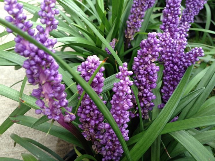 Piante da giardino piante per giardino piante per il - Azalee da esterno ...