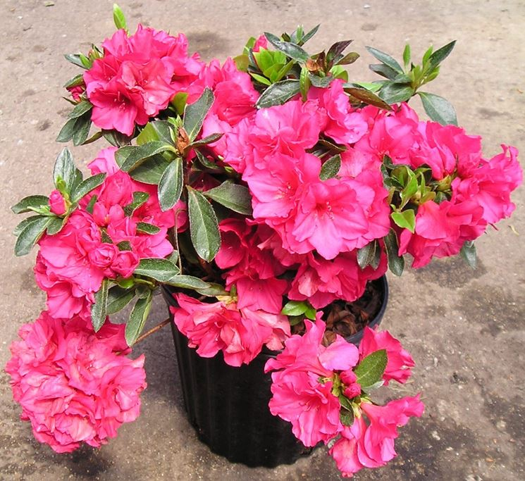 Piante da giardino piante per giardino piante per il - Piante da giardino invernali ...