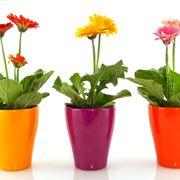 Varietà di piante da esterno