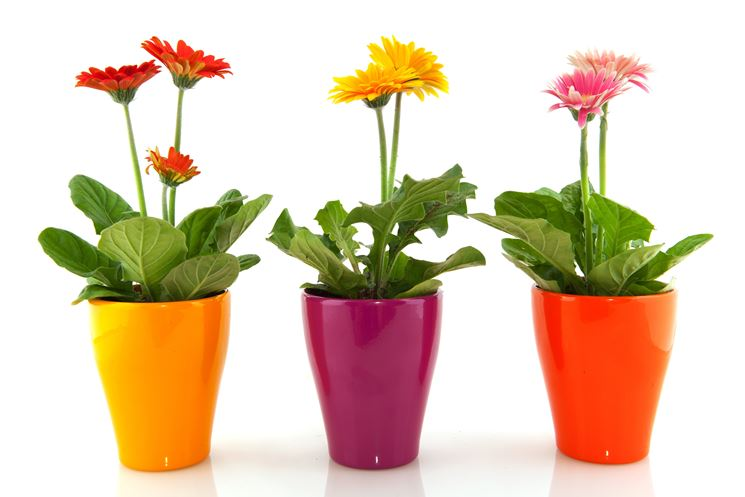 Piante da vaso per esterno piante per giardino piante - Piante da vaso esterno ...