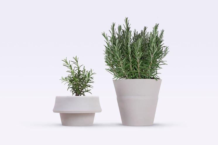 Piante da vaso per esterno piante per giardino piante for Piante da vaso da esterno