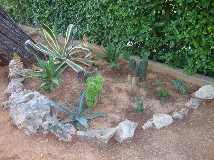 Très Piante grasse da esterno - Piante per giardino - Piante giardino FD27