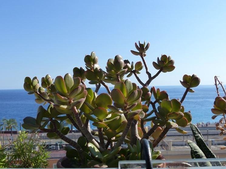 Piante grasse da esterno piante per giardino piante - Piante grasse da esterno pendenti ...