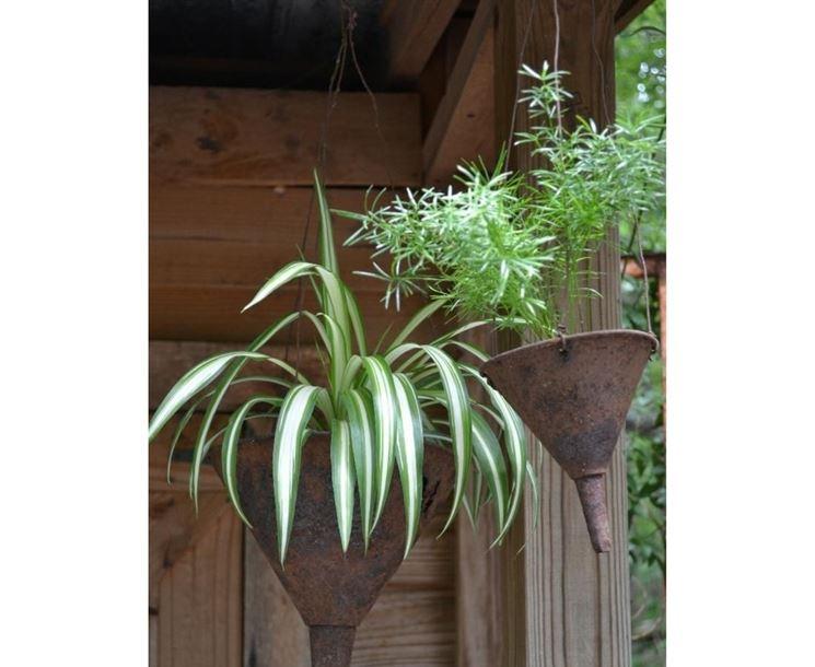 Piante ricadenti piante per giardino variet piante - Piante per giardino ...
