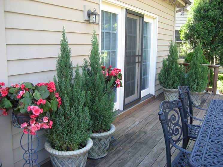 Sempreverdi piante per giardino piante sempreverdi for Piante sempreverdi per giardino