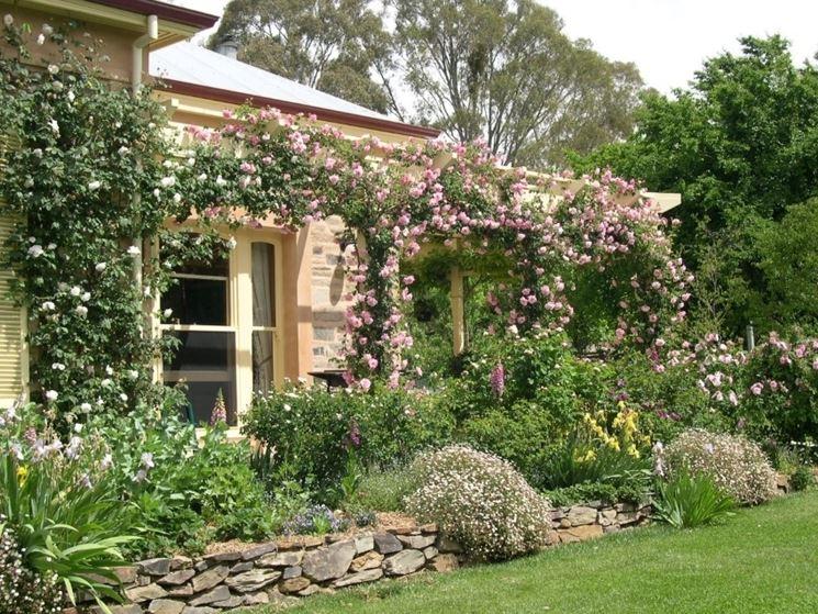 Siepi da giardino piante per giardino scegliere la for White house rose garden design