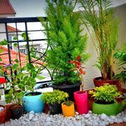 Esempio di vasi per piante