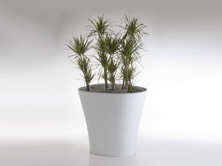 Vasi Per Piante In Resina : I vasi in resina per piante tipi di