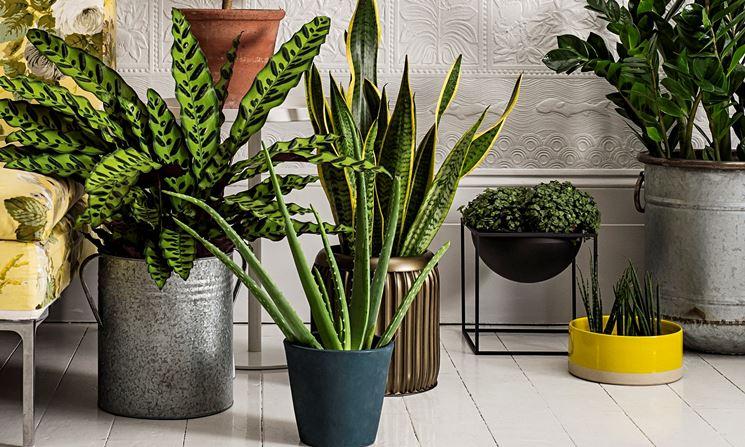 vasi arredo interno vasi per piante vasi arredo interno casa. Black Bedroom Furniture Sets. Home Design Ideas
