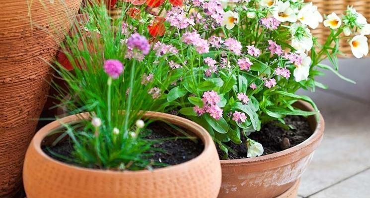 Vasi da giardino vasi per piante tipologie di vasi per for Vasi per piante