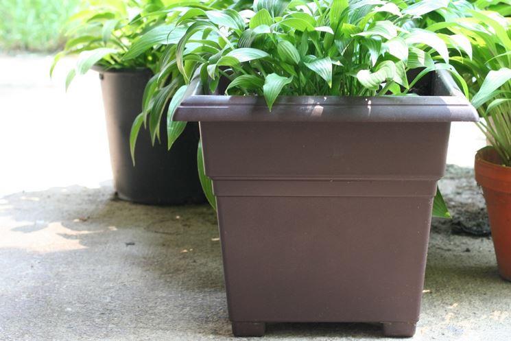 Vasi in plastica per piante vasi per piante vaso pianta for Vasi per piante