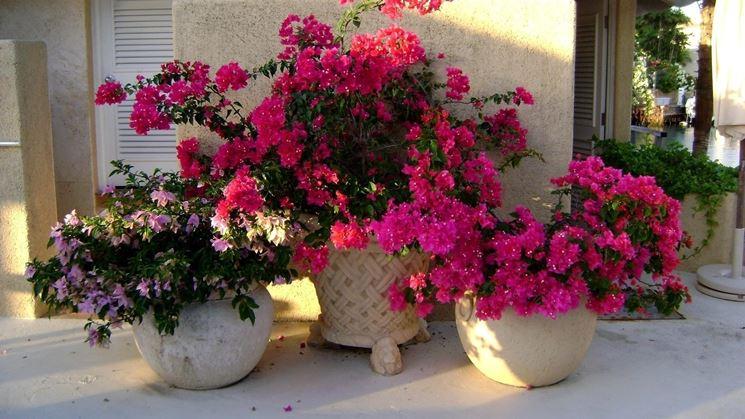 Vasi per fiori vasi per piante tipologie vasi for Vasi rettangolari plastica