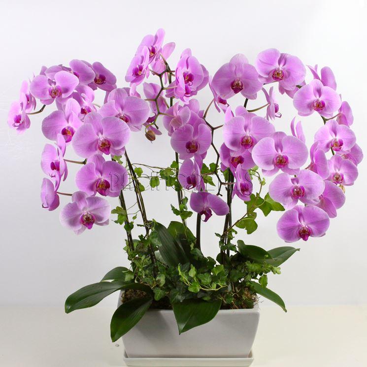 Vasi orchidee
