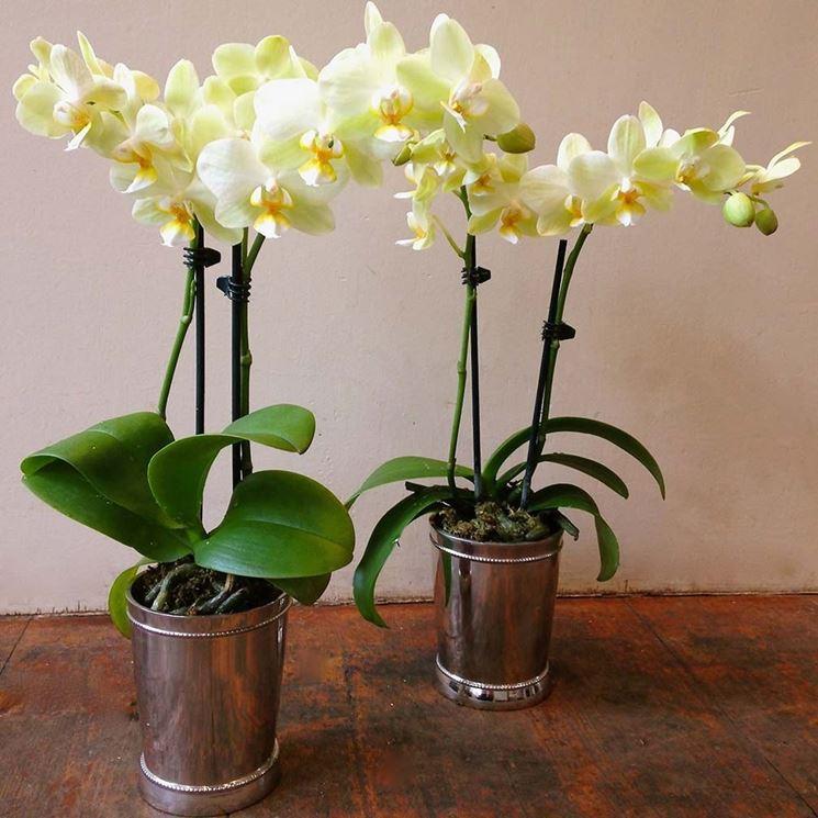 Vasi per orchidee vasi per piante tipologie di vaso - Vasi per orchidee ...