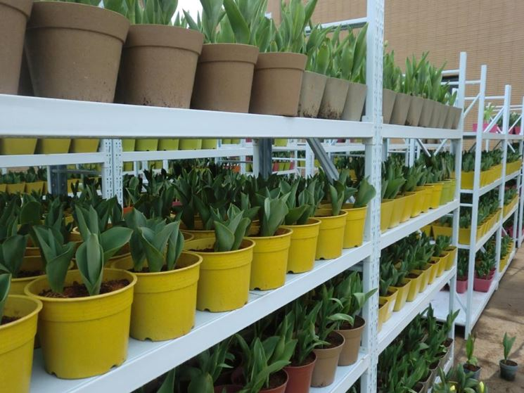 Vasi per vivai - Vasi per piante - Tipologie di vasi per vivaio
