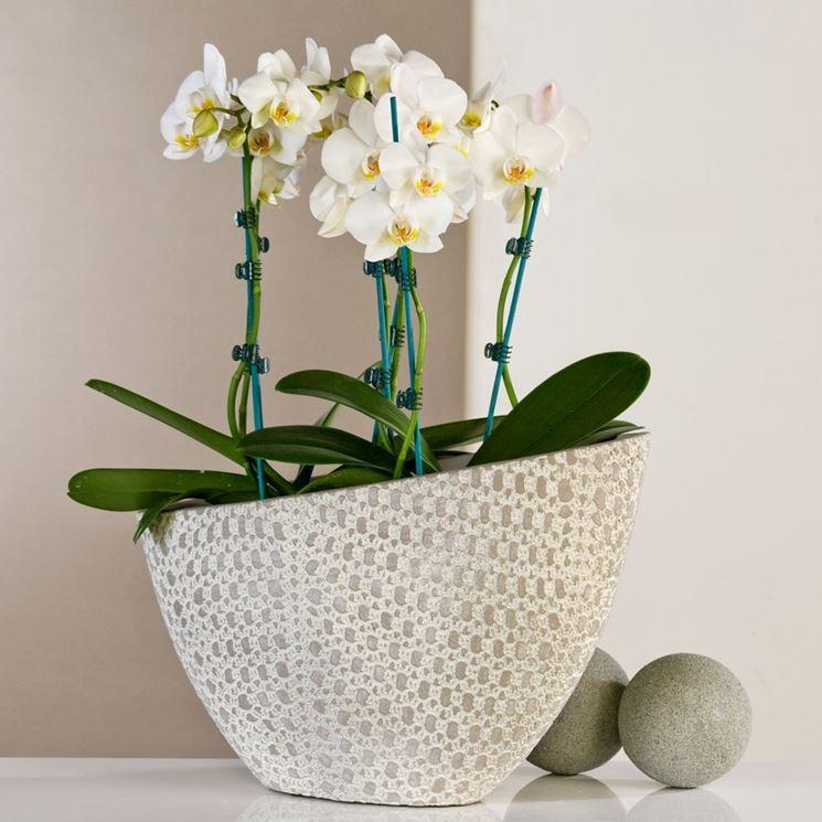 Vasi particolari simple vasi moderni da interno with vasi for Vasi per piante da interno moderni